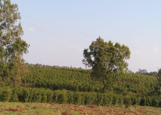 Land For sale in Ruiru off Thika Road by Danco limited, Registered Valuers and Estate Agents.